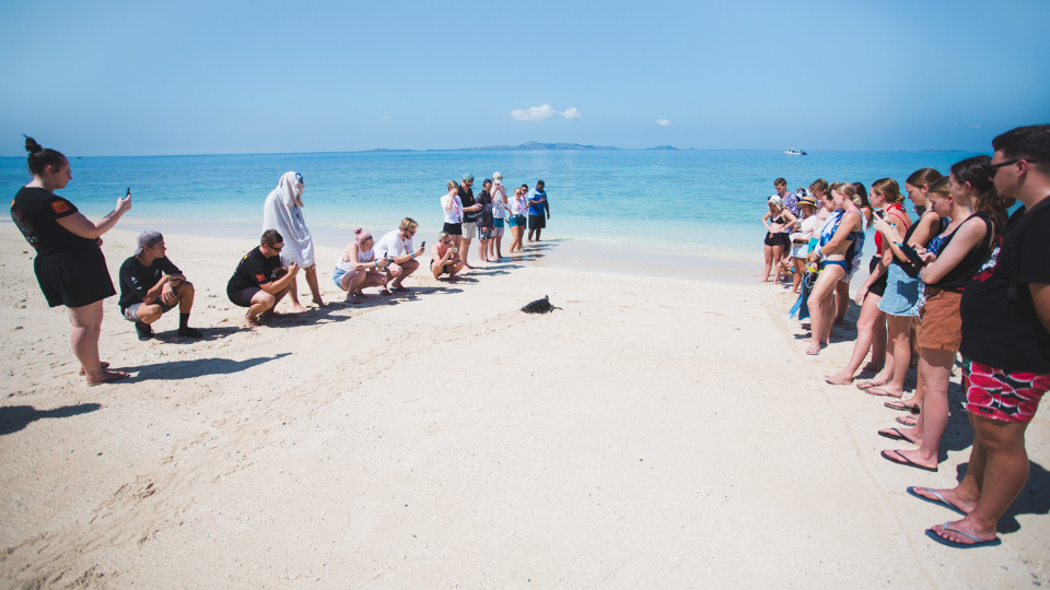 Fiji-Turtle-Release.png
